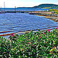 Rocky Harbour Roses-nl by Ruth Hager