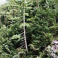 Mountain - Landscape - Trees - Rocky Hillside by Barry Jones
