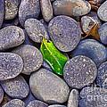 Rocky Landing by Paulette B Wright