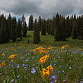 Rocky Mountain Bloom by Susan Rovira