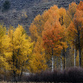 Rocky Mountain Fall by Wes and Dotty Weber