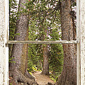 Rocky Mountain Forest Window View by James BO Insogna