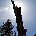 Rocky Mountain Obelisk by Jim Garrison