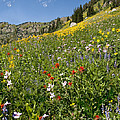 Rocky Mountain Wildflower Landscape by Timothy Flanigan