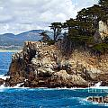 Rocky Outcropping At Point Lobos by Charlene Mitchell