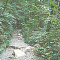 Rocky Path by Mark Nickel