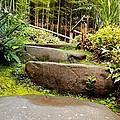 Rocky Path by Scott Hill