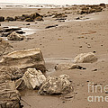 Rocky Shore by Amanda Barcon