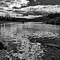 Rocky Shore Of The Moose River by David Patterson