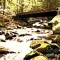 Rocky Stream With Bridge by Desiree Paquette