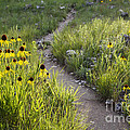 Rocky Top Trail by Dennis Hedberg