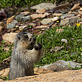 Rodent In The Rockies by Kathleen Bishop