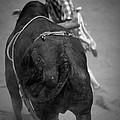 Rodeo Clown by John Magyar Photography