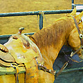 Rodeo Horse by Alice Gipson
