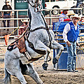Rodeo Horse Cheers by Gary Keesler