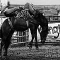 Rodeo Power Of Conviction by Bob Christopher