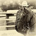 Rodeo The Cowboy Way by Bob Christopher