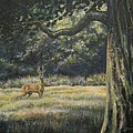 Spirit Of The Moment - Roe Buck by Abigail Mohon