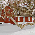 Roger Williams Cottage In Winter by Butch Lombardi