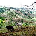 Rolling Hills by Hilari Alsip