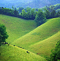 Rolling Hills Of Tennessee by Carolyn Derstine