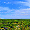 Rolling Hills by Rima Biswas
