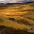 Rolling Hills by Robert Bales