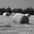 Rolling In The Hay Bw by Robyn Stacey