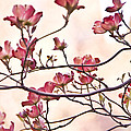 Romance Flora by Olga Ska