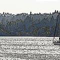 Romance II On Liberty Bay by Greg Reed