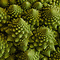 Romanesco Broccoli Close Up by Marianne Donahoe