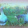I Try To Be As Romantic As A Simple Goose But I Know Too Much  by Hilde Widerberg