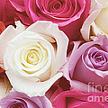 Romantic Rose Garden by Kim Fearheiley