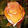Romantic Rose by Lutz Baar