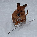 Romp In The Snow by Mim White