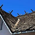 Roof Shingle by Viktor Savchenko