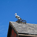 Roof Top Bird by Denise Mazzocco