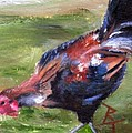 Rooster Aceo by Brenda Thour