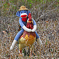 Rooster Rider by Al Powell Photography USA