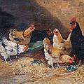 Roosters Circa 1880 by David Lloyd Glover