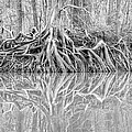 Rooted by Brian Gauger