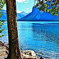 Rooted In Lake Minnewanka by Linda Bianic