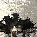 Rooted In The Mississippi River by Luther Fine Art