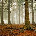 Rooted by Joye Ardyn Durham