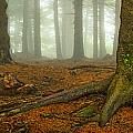 Rooted-pano by Joye Ardyn Durham