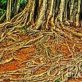 Roots 5 by Charles Davis