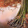 Roots by Alfio Finocchiaro