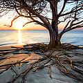 Roots Beach by Debra and Dave Vanderlaan