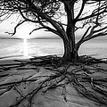 Roots Beach In Black And White by Debra and Dave Vanderlaan