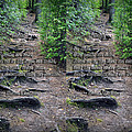 Roots - Cross Your Eyes And Focus On The Middle Image That Appears by Brian Wallace